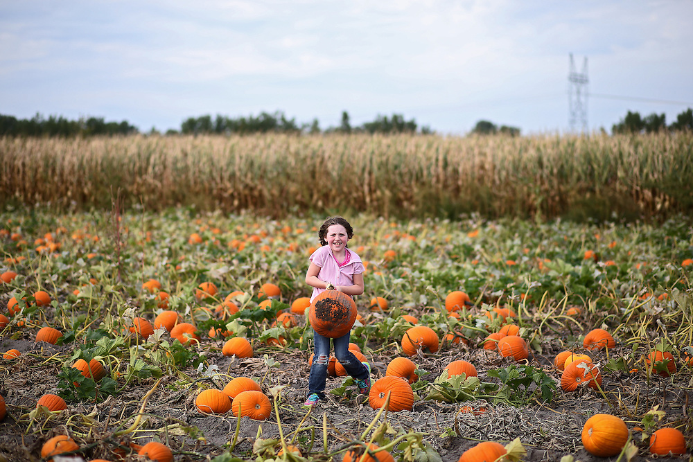 Felicity Conway picks a pumpkin while visiting Helgoth's Pumpkin Patch with Girl Scout troop 519 of Hastings Friday in St. Libory. (Independent/Matt Dixon)