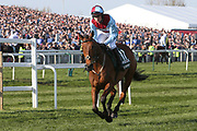 Ballyoptic and jockey Tom Bellamy head to the start for the 5:15pm The Randox Health Grand National Steeple Chase (Grade 3) 4m 2f during the Grand National Meeting at Aintree, Liverpool, United Kingdom on 6 April 2019.