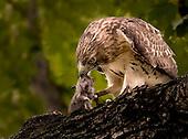 Birds of Prospect Park (2)