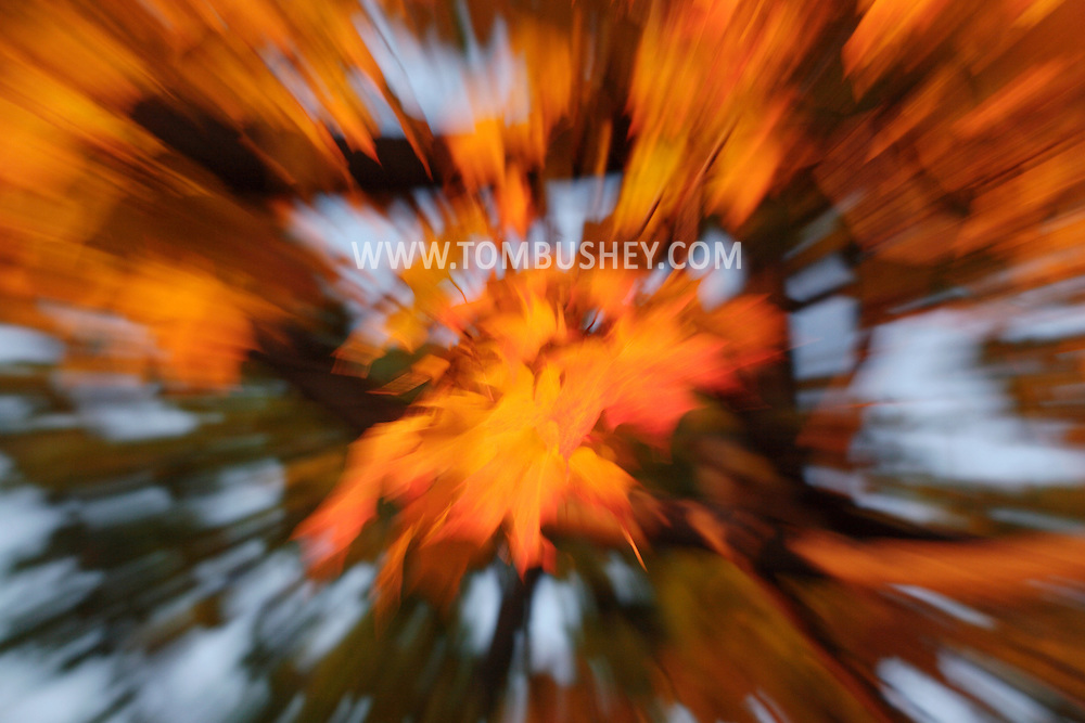 Middletown, N.Y. -  Yellow and orange maple leaves a blurred by zooming during a long exposure on Oct. 31, 2007.
