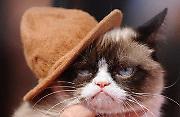 Internet Sensation Grumpy Cat Dies at Age 7 - 17 May 2019