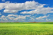 Field of oats<br /> Neidpath<br /> Saskatchewan<br /> Canada