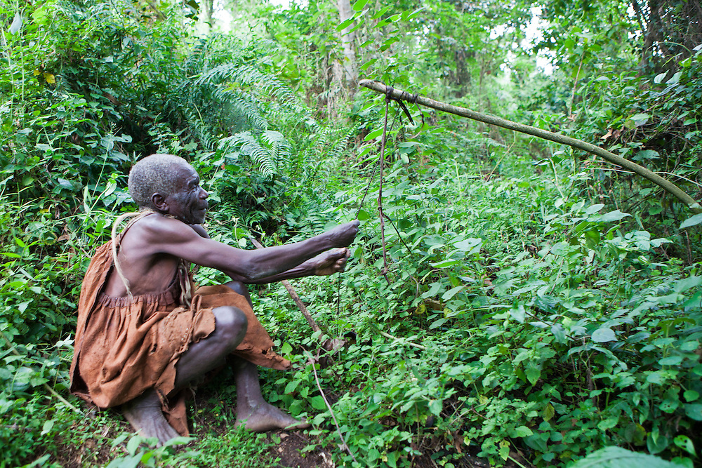James demonstrates an animal snare trap in Bwindi Impenetrable Forest in Uganda.They were indigenous forest nomads before they were evicted from the Bwindi Impenetrable Forest when it was made a World Heritage site to protect the mountain gorillas.  The Batwa Development Program now supports them.