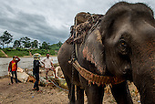Laos' Elephant Industry