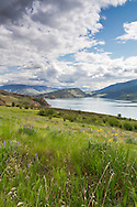 A field in Kekuli Bay Provincial Park on Kalamalka Lake near Vernon, British Columbia, Canada