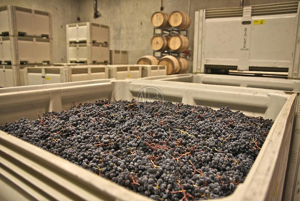 Brian Carter Cellars Grape Crush 2009 Woodinville, WA