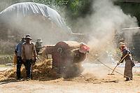 Threshing barley during the harvest, Gonggar, Lhoka (Shannan) Prefecture, Tibet (Xizang), China