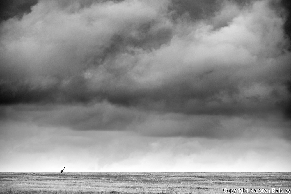 &ldquo;Africa!&rdquo;                                                              Tanzania<br />
