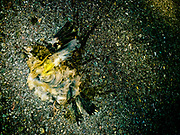 Dead bird on the road looking like it is in flight.