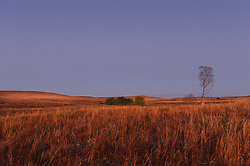 Prairie grasses, wildflowers and a cottonwood tree are bathed in the dawn light moments before a fall sunrise at the Tallgrass Prairie National Preserve. The 10,894-acre Tallgrass Prairie National Preserve is located in the Flint Hills of Kansas in Chase County near the towns of Strong City and Cottonwood Falls. Less than four percent of the original 140 million acres of tallgrass prairie remains in North America. Most of the remaining tallgrass prairie is in the Flint Hills in Kansas. Tallgrass Prairie National Preserve is the only unit of the National Park Service dedicated to the preservation of the tallgrass prairie ecosystem. The Tallgrass Prairie National Preserve is co-managed with The Nature Conservancy.