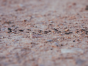 a column of ants marching over sand