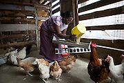 Linna Kinabo feeding her chickens. <br /> <br /> Linna set up and now runs a poultry business selling both eggs and meat.<br /> <br /> She attended MKUBWA enterprise training run by the Tanzania Gatsby Trust in partnership with The Cherie Blair Foundation for Women.
