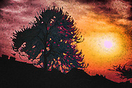 Digital Painting of Silhouette of Tree during sunset