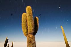 Star trails on a clear night above the trichoreus cacti of Isla Incahuasi,Salar de Uyuni,  Bolivia,South America