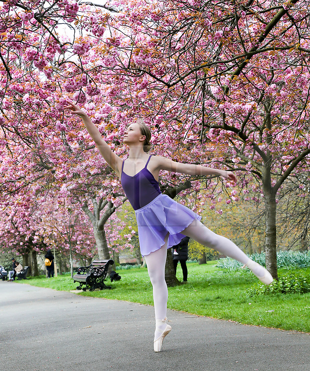 © Licensed to London News Pictures. 13/04/2019. London, UK. Milly Collison practices a ballet move under the cherry blossom trees which are now in full bloom in Greenwich Park, in South East London. The weather forecast is set to be warmer for the Easter weekend. Photo credit: Dinendra Haria/LNP