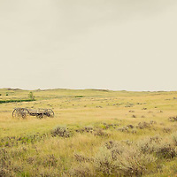 short grass prairie of eastern and central montana