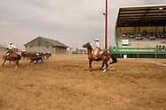 Will James Roundup, Ranch Rodeo, Three Man Cow Doctoring, Hardin, Montana, Reata Brannaman, Sara Sandusky