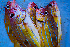 Negombo Fish Market, Negombo, Sri Lanka