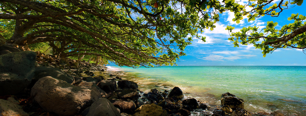 Trees overhang the ocean at Punaluu on Oahu's windward coast.
