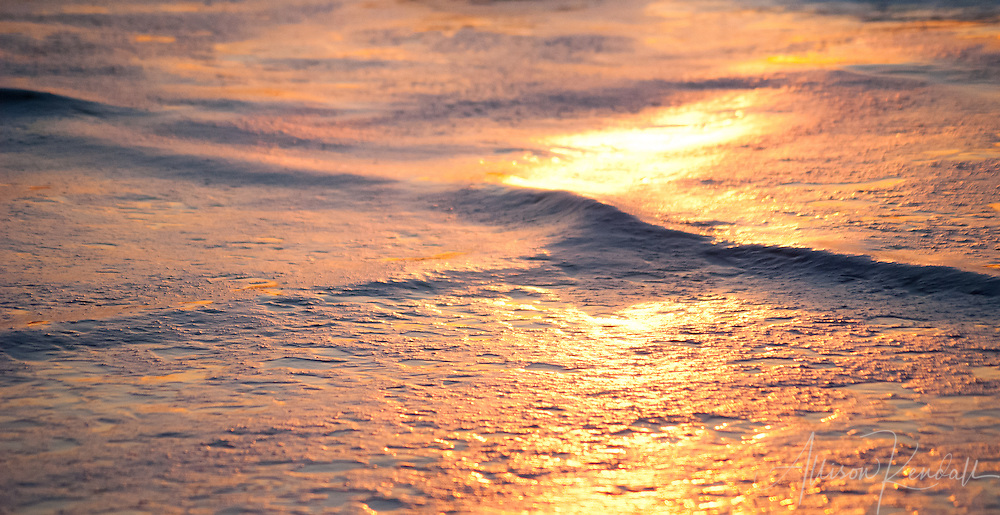 Gold sunset light paints the foam of waves on the beach in vivid colors fine art photography, art photography, fine art, prints, photo print, fine art prints, photography art prints,