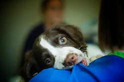 Puppy dog at Arnwood Veterinary Surgery, Nottingham.
