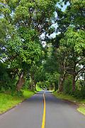 Mango tree tunnell, Puna, Island of Hawaii