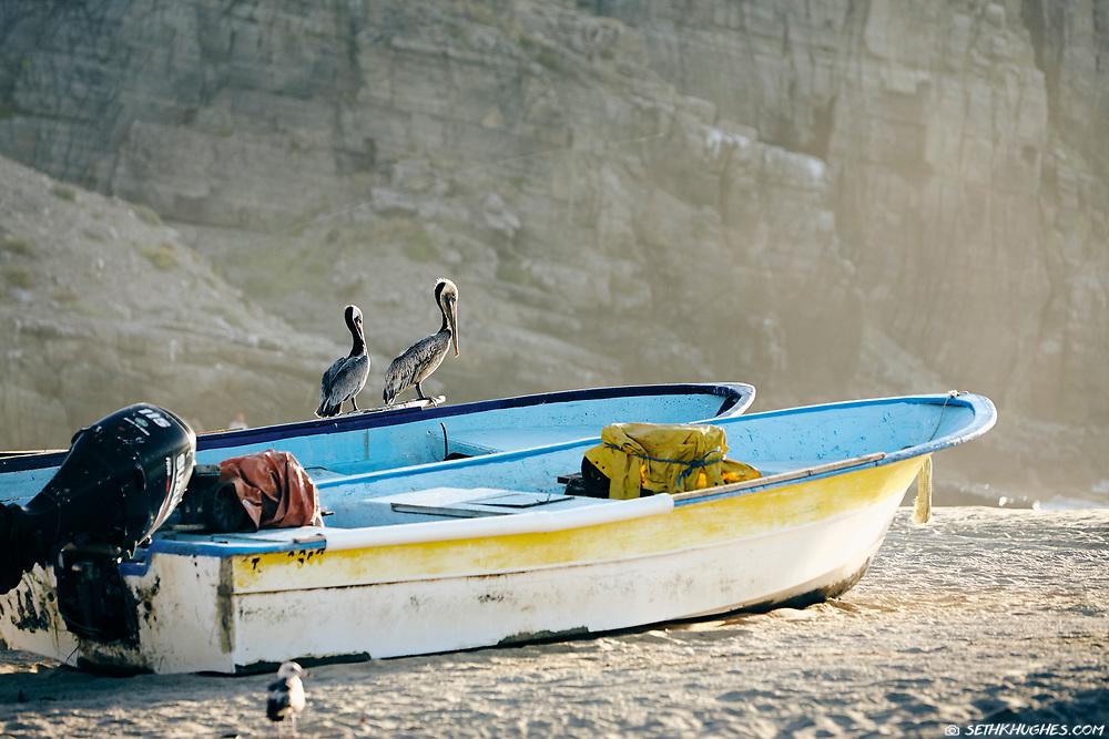 Punta Lobos, Todos Santos, Baja California Sur, Mexico