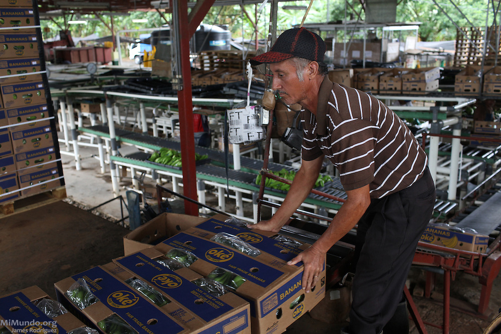 Ediberto Castillo, member of COOBANA, pushes fair-trade banana boxes into a loading zone. COOBANA, Finca 51, Changuinola, Bocas del Toro, Panamá. September 3, 2012.
