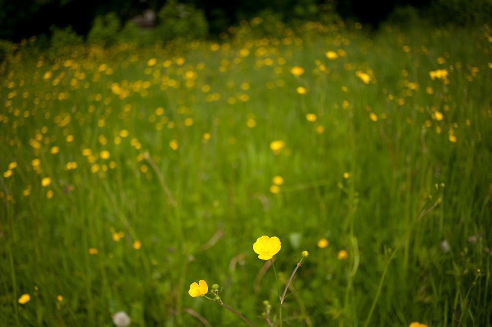 A meadow in western Washington.
