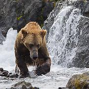 Bears of 2016
