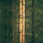 Torlum wood, Crieff