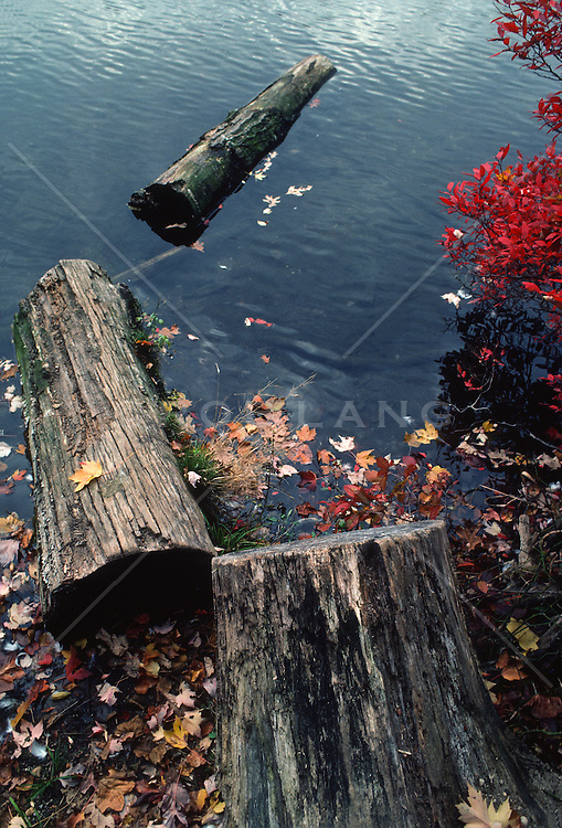 pieces of a tree trunk in a lake during the fall season