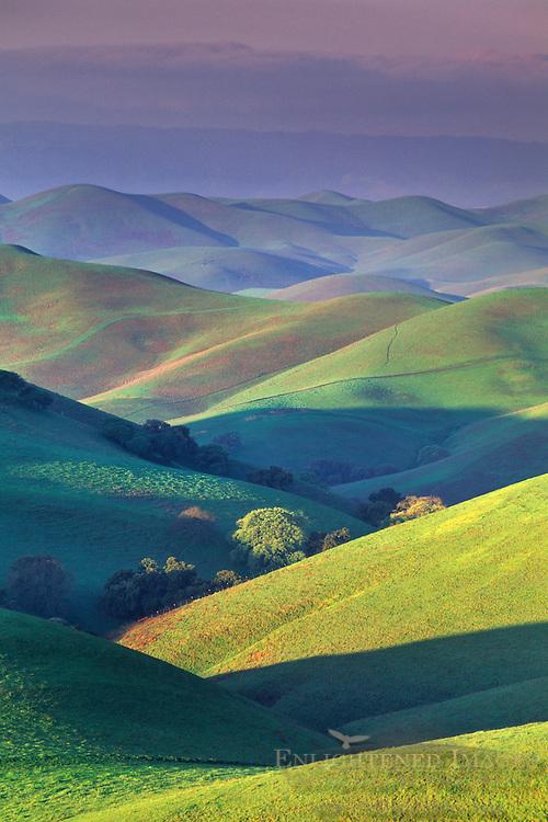 First light of morning on green hills in spring, Tassajara Region, Contra Costa County, CALIFORNIA