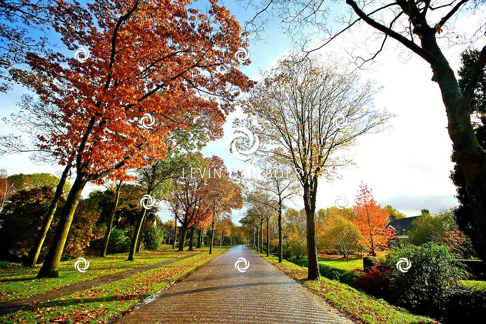 BOMMELERWAARD - Het is weer herfst in de Bommelerwaard en dat levert natuurlijk weer de nodige mooie platen op. FOTO LEVIN DEN BOER - PERSFOTO.NU