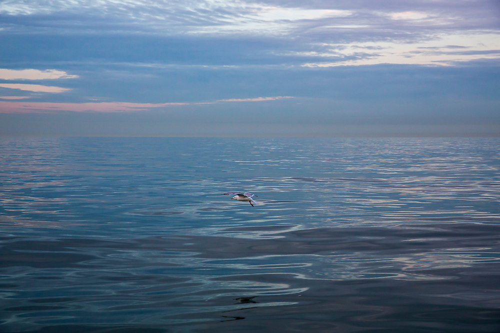 A seagull flies across the clam waters of The English Channel from Folkestone Kent, England, United Kingdom. <br /> (photo by Andrew Aitchison / In pictures via Getty Images)