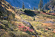 brilliant autumn colors in meadow, Austin Pass, North Cascades National Park, Washington State