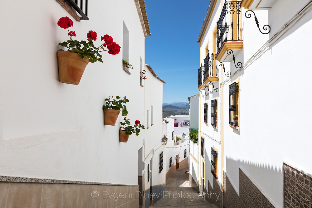 Flower pots on the white walls of andalucian houses