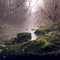 A river in woodland with moss covered boulders