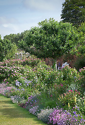 Borders filled with roses, foxgloves, pinks and campanulas in the walled rose garden at Mottisfont