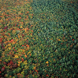 Carroll, NH. Hardwood forest in the White Mountain National Forest.  North of Mt. Lafayette and Mt. Garfield.