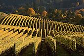 WINE - Landscapes