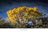 20x30 poster print of autumn cottonwood reflected in water.