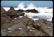 04: NATURE TERNS, SEALS