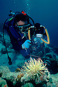UNDERWATER MARINE LIFE CARIBBEAN, generic Underwater photographer, marine life