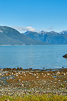 Haines Beach and Harbor Panorama. Image 6 of 11 images taken with a Nikon D300 camera and 18-200 mm VR lens (ISO 400, 34 mm, f/11, 1/500 sec). Raw images processed with Capture One Pro. Composite panorama created using AutoPano Giga.
