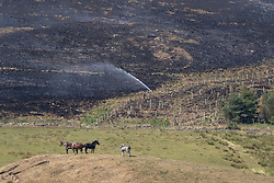 © Licensed to London News Pictures . 03/07/2018. Bolton, UK. Firefighters dowse scorched and smoking moors . Fire-fighters continue to work to contain large wildfires spreading across Winter Hill as very high temperatures , changing winds and dry peat continue to exacerbate the problem . Photo credit: Joel Goodman/LNP