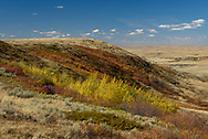 Before leaving the East Block of Grasslands National Park I made a stop at the Killdeer Badlands. In contrast to other parts of the park, here there were some very colorful trees in between the hills.