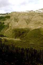 Washington: Volcano, devastation from Mt. St. Helens, Clearwater, photo: wahele104  .Photo copyright Lee Foster, www.fostertravel.com, 510/549-2202, lee@fostertravel.com