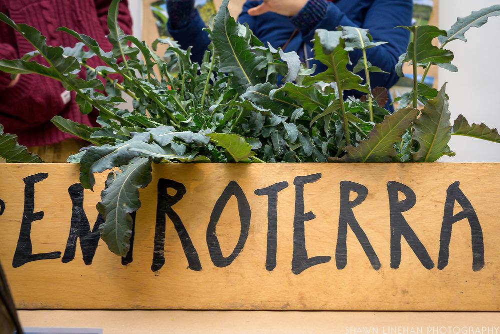 Agricola Entroterra - Santorso (VI) - Broccolo Fiolaro