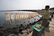 Udo, a small Island near Jeju-do. Drying calamars on a longline.